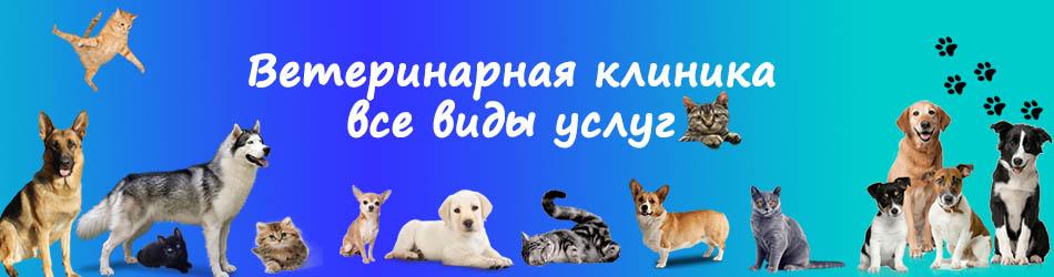 УЗИ собаке и кошке