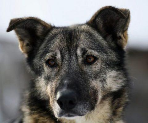 ЭКГ собаке в ветеринарной клинике