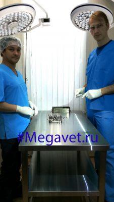 Врачи ветклиники Megavet.ru готовы взяться даже за самые сложные и запущенные случаи